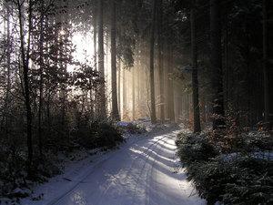 Charakteristika Lesní správy Ledeč nad Sázavou