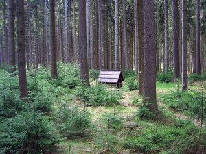 Program 2020 arekreační funkce lesa